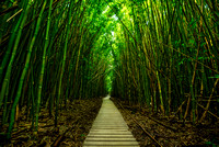 The magical and mysterious bamboo forest of Maui.